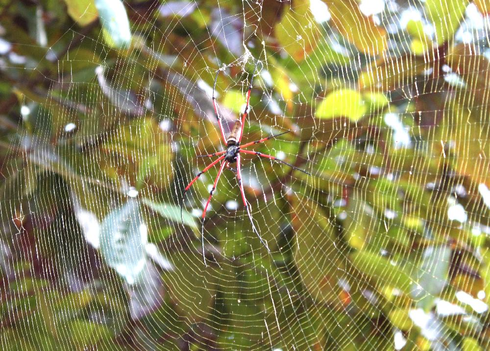 deo gegen spinnen
