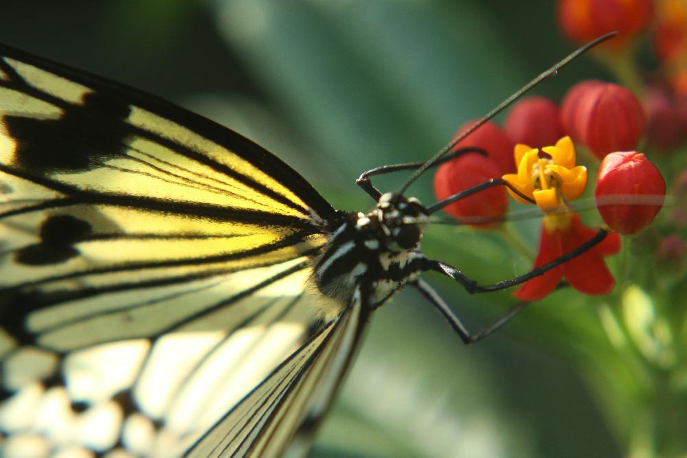 Doi Khun Tan National Park Nationalparks Rund Um Chiang Mai