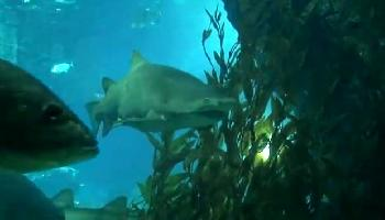 Siam Paragon Aquarium - Bangkok Video