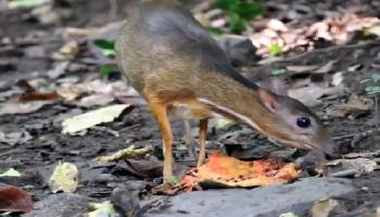 Wildtiere im Kaeng Krachan National Park  - Hua Hin / Cha Am Video