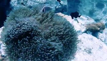 Koh Chang Scuba Diving - Koh Chang Video