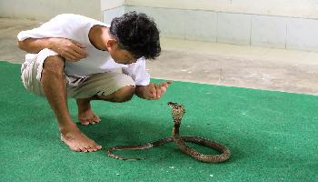 Pasteur-Institut Snake Farm - Bangkok Video