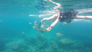Schnorcheln um PhiPhi Islands - Krabi Video